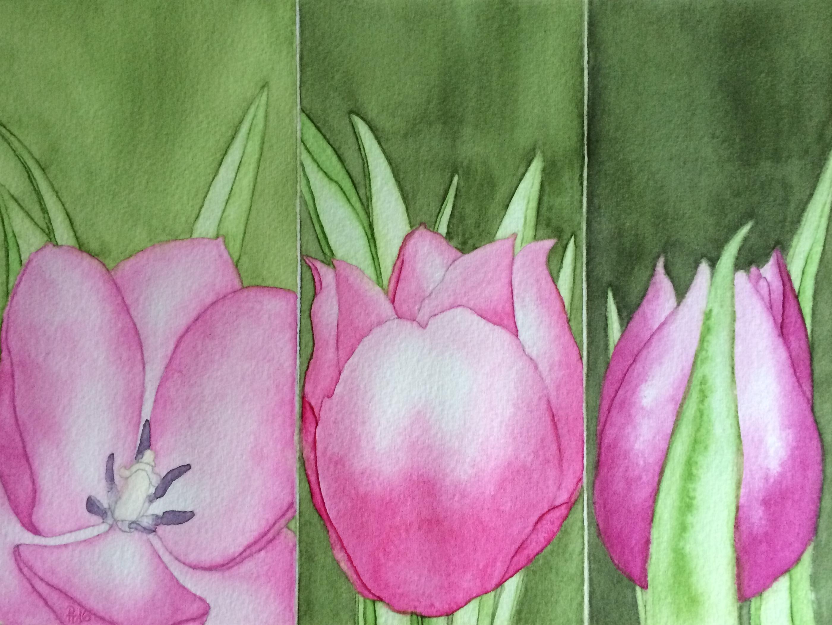 Tulpen 2 (zu verkaufen)
