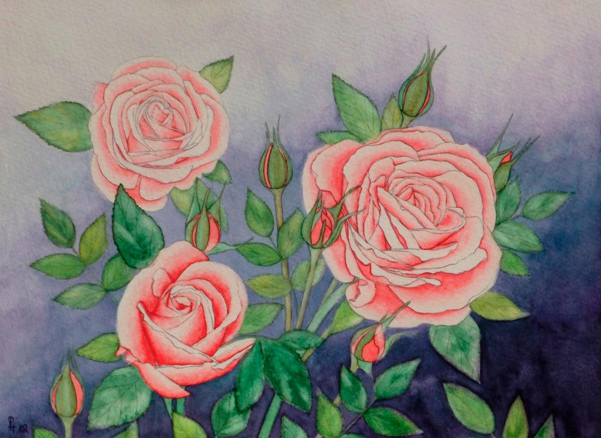 Rosen 6 (verkauft)