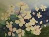 Apfelblüten 2 (nicht verkäuflich)