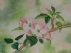 Apfelblüten 3 (verkauft)