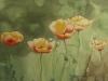 Mohnblumen 2 (verkauft)
