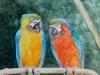 Papageien (zu verkaufen)