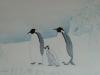 Pinguine (verkauft)