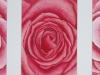 Rosen 2 (nicht verkäuflich)