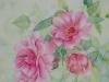 Rosen 5 (zu verkaufen)