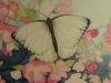 Schmetterling 1 (nicht verkäuflich)