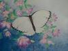 Schmetterling 2 (nicht verkäuflich)