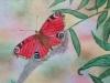 Schmetterling 5 (zu verkaufen)