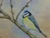 Vogel 3 (zu verkaufen)